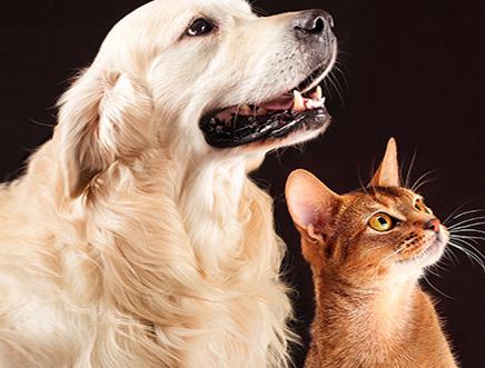link-pet-cares